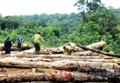 Vietnam and the EU signed the VPA/FLEGT: Promoting the development of the timber industry