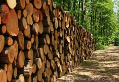 TIMBER EXPORT SHALL HAVE A CHANCE TO REACH US$8 BILLION